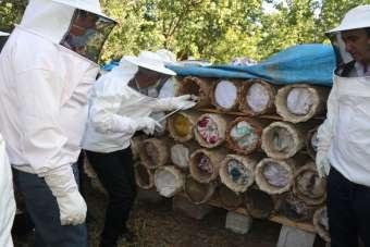 Van'da 6. Geleneksel Organik Karakovan Bal Kesimi etkinliği