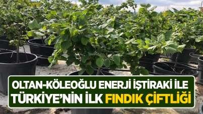 OLTAN-KÖLEOĞLU ENERJİ iştiraki ile Türkiye'nin ilk fındık çiftliği