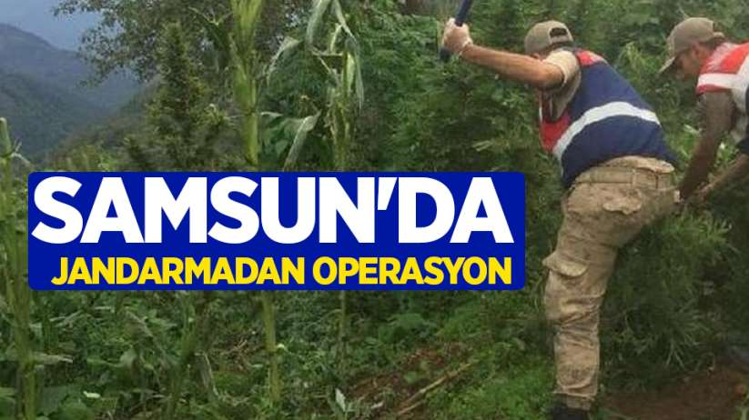 Samsun'da jandarmadan operasyon