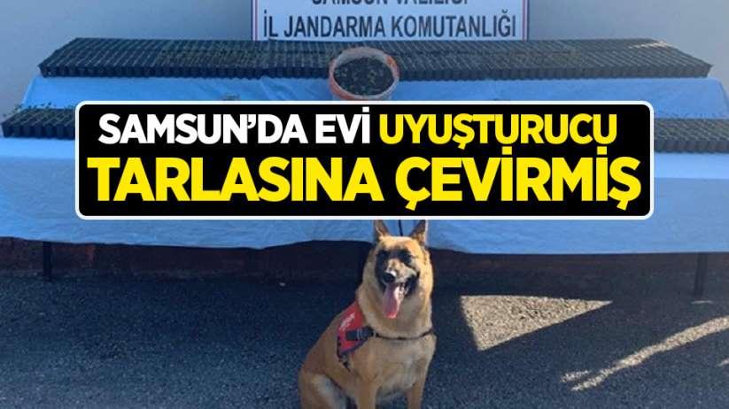 Samsun'da evi uyuşturucu tarlasına çevirmiş
