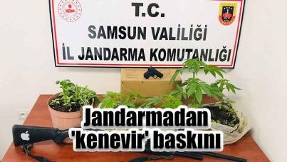 Samsun'da Jandarmadan 'kenevir' baskını