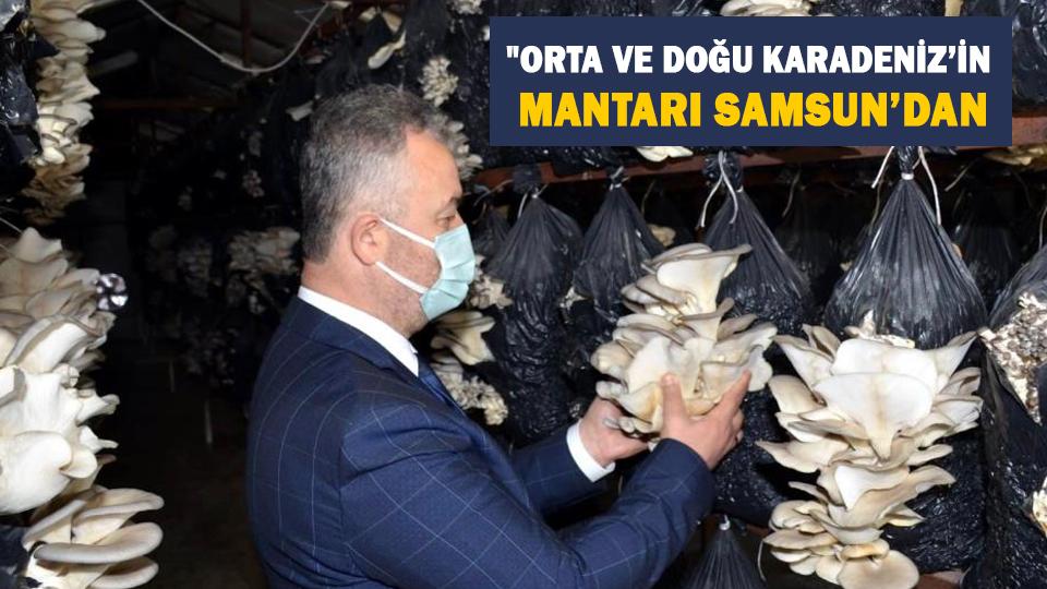 Orta ve Doğu Karadeniz'in mantarı Samsun'dan