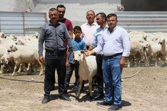 Aksaray'dan canlı hayvan ihracatı başladı