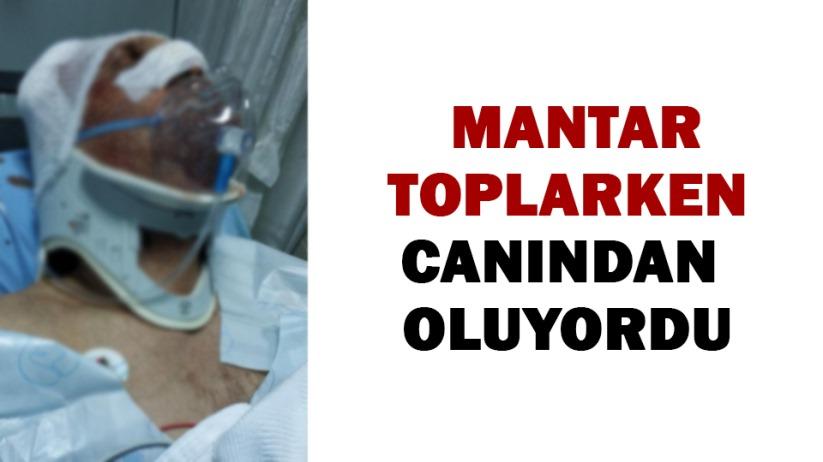Mantar toplarken yamaçtan yuvarlanan yaşlı adam ağır yaralandı