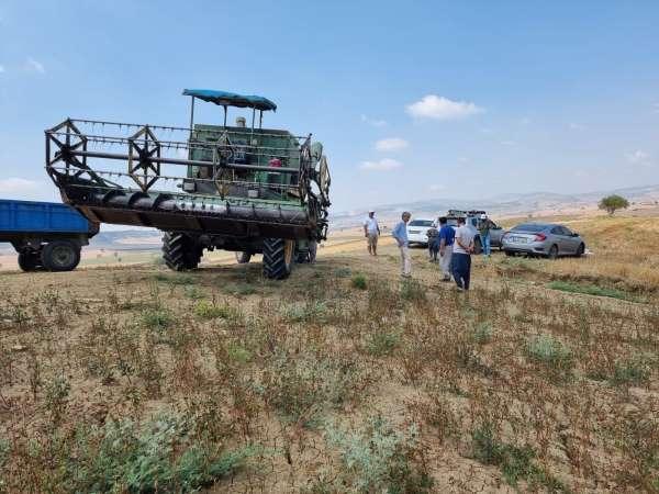 Tarsusta karabuğday hasadı
