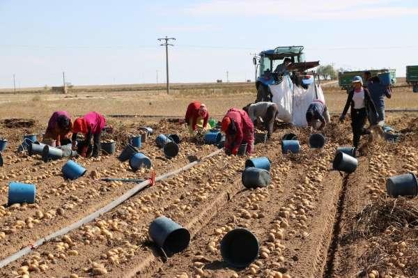 Patates üreticisi, ihracat ve tanzim satışı istiyor