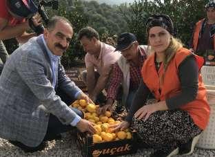 Satsuma mandalinanın ihracat yolculuğu 19 Ekim'de başlıyor