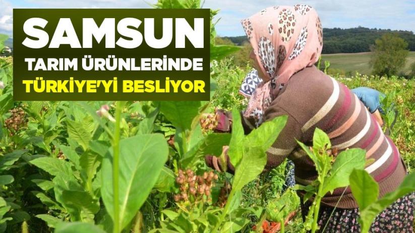 Samsun tarım ürünlerinde Türkiyeyi besliyor