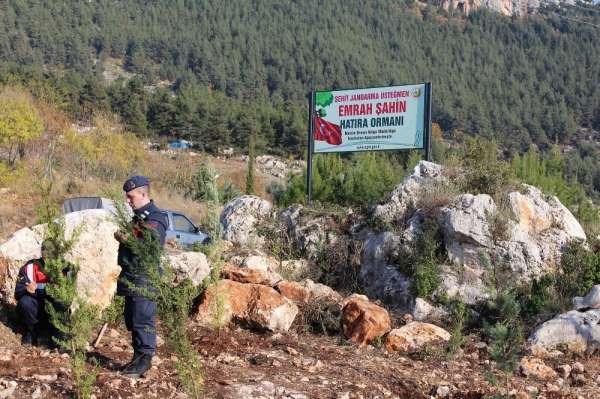 Şehit Emrah Şahin'in adı hatıra ormanı ile yaşayacak