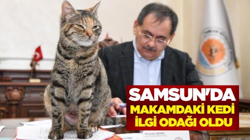 Samsunda makamdaki kedi ilgi odağı oldu