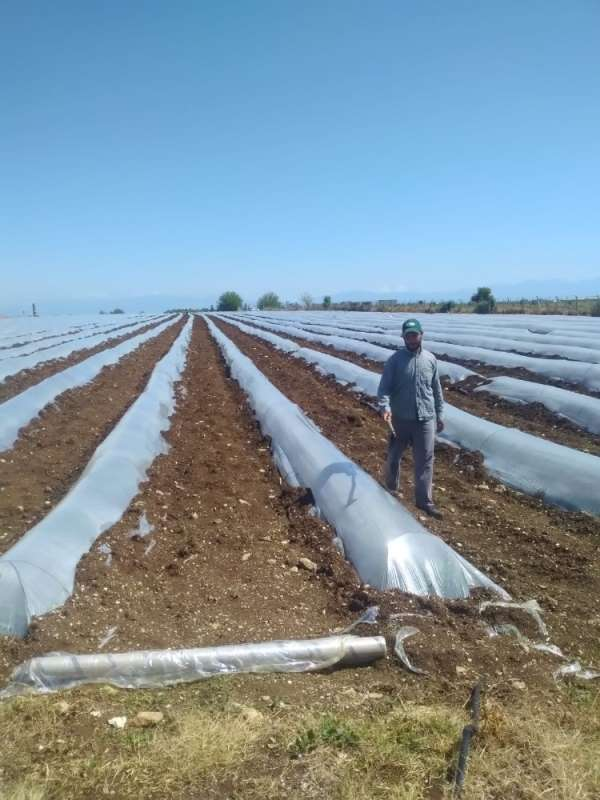Adana'da tarımsal üretim devam ediyor