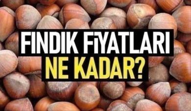 Samsun'da fındık fiyatları ne kadar? 13 Nisan Salı fındık fiyatları