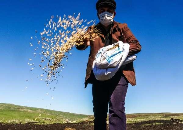 Traktör koltuğuna geçen belediye başkanı asırlık kavılca buğdayını toprakla buluşturdu