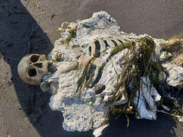 Samsunda sahile iskelet vurdu