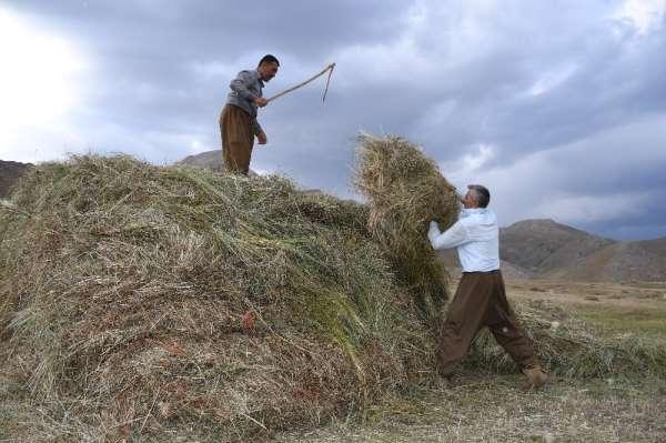 Şırnak'ta saman hasadı başladı
