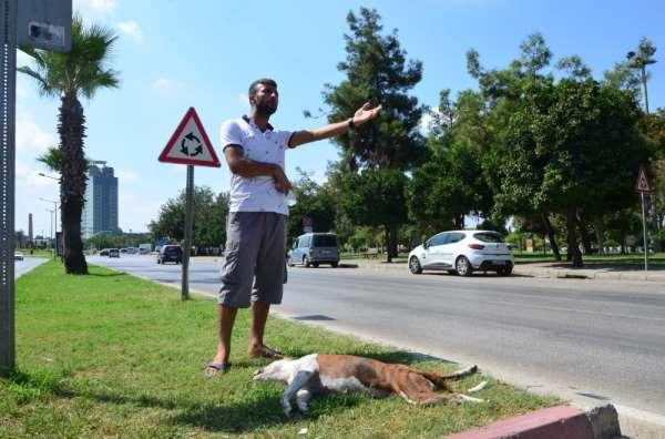Köpeği trafik kazasında öldü başından ayrılmadı
