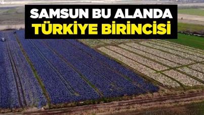 Samsun bu alanda Türkiye birincisi