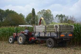 Sinoplu çiftçiler silaj yapımına başladı