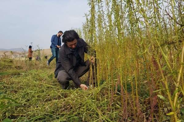 Bingöl Üniversitesi 'Kenevir sapı ve jüt' bitkisinden kovan üretecek