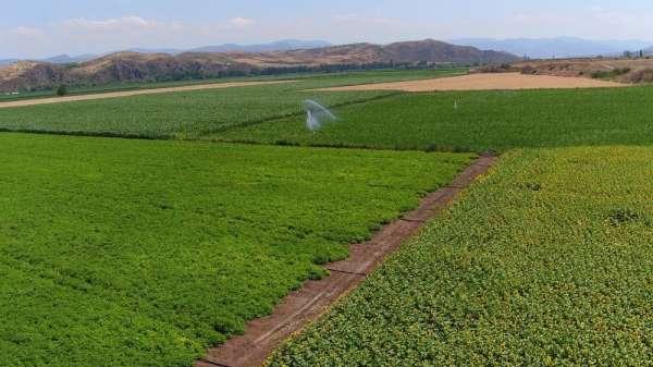 Amasya'da 30 bin dekar alan sulandı