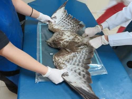 Yaralı 672 yaban hayvanı tedavi edilerek tabiata salındı