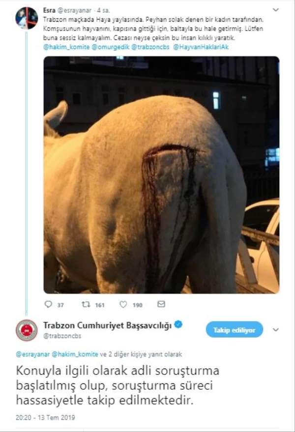 Trabzon'da eşek saldırıya uğradı, başsavcılık soruşturma başlattı