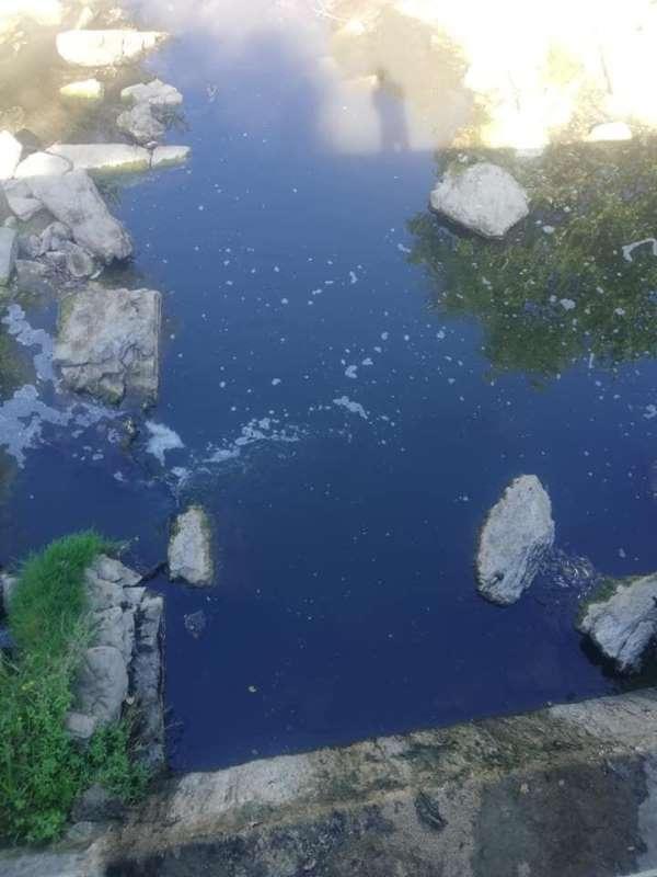 Çınarçık Deresi'ndeki balık ölümlerine muhtardan tepki