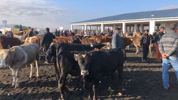 Kars'ta saman fiyatları hayvan pazarını olumsuz etkiliyor