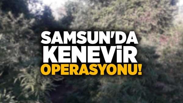 Samsun'da Kenevir Operasyonu