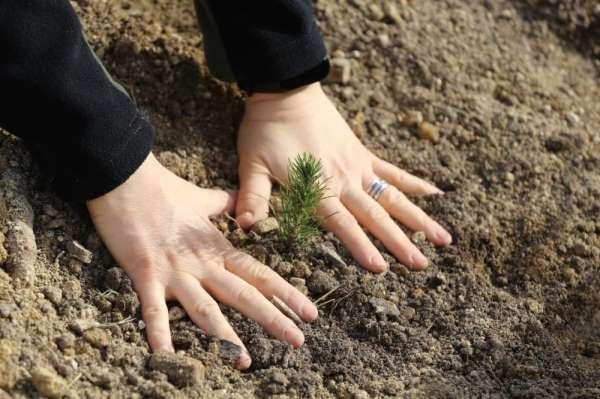 Manisa ormanlarına kadın eli değdi