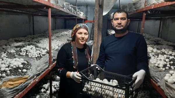 30 metrekare yerde yetiştirdikleri mantar ailenin geçim kaynağı oldu