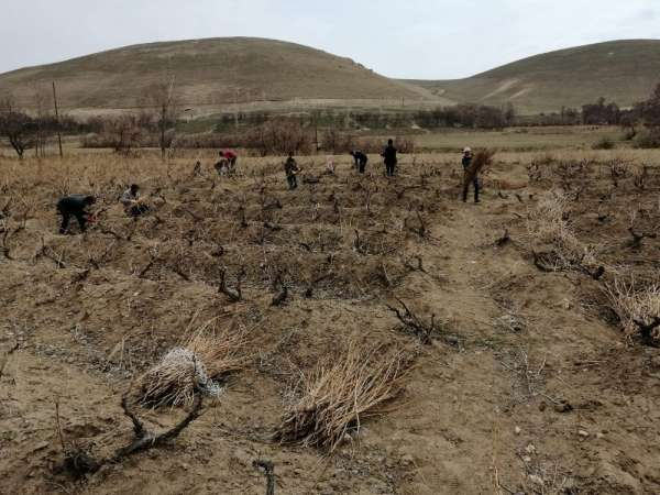Milletvekili Arvas: 'Tarımsal ve kültürel değeri olan Erciş üzümünü yaygınlaştır