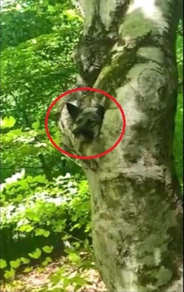 Ordu'da ağaç kovuğuna sıkışan köpek kurtarıldı