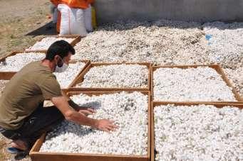 Sason'da koza yetiştiricileri bir ayda 400 bin lira kazanç sağladı