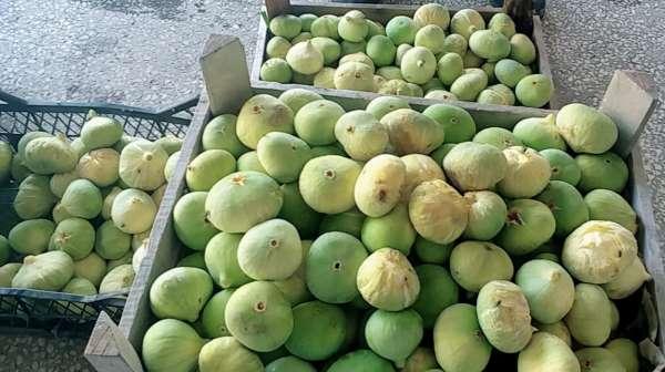 Mersinde incirin kilosu 20 liradan alıcı buldu