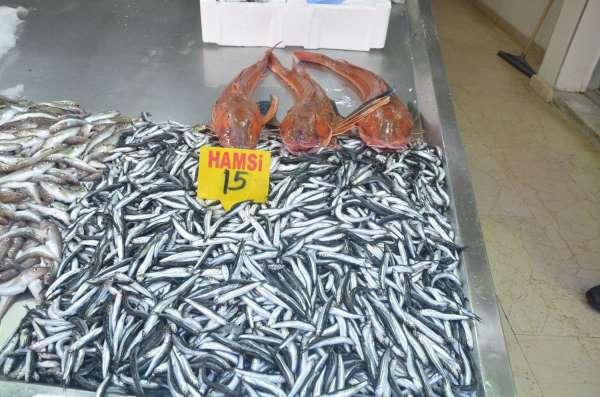 Sinopta 5 kiloluk kırlangıç balığı yakalandı