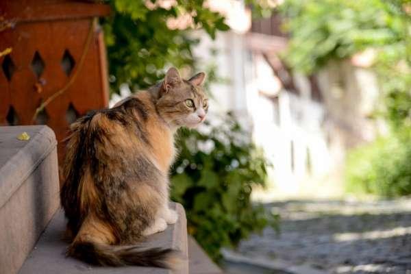 Başkan Balcı'nın talimatıyla Kale'nin kedilerine sahip çıkıldı