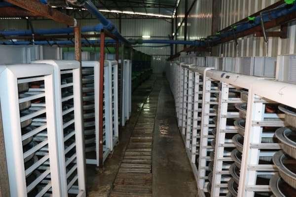 (Özel Haber) Türkiyenin balık üretim merkezi: Fırat Nehri