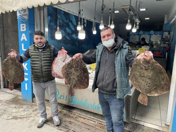 Karadenizde kalkan balığı bereketi: Kilosu 200 TL