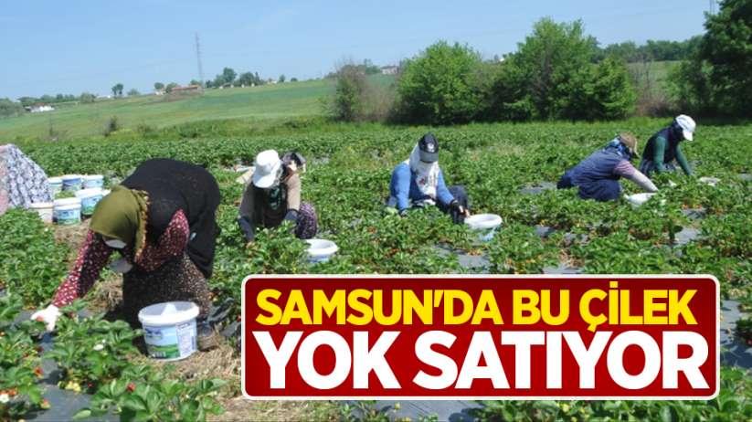 Samsun'da bu çilek yok satıyor