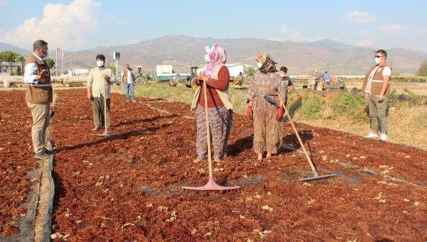 Alaşehir'de üreticilere fiyat uyarısı