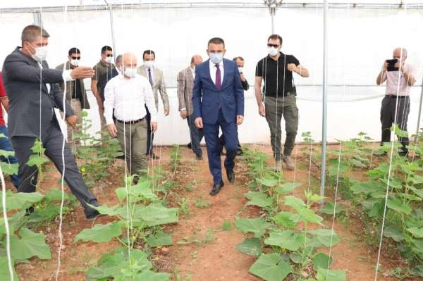 Siirt'te son 5 yılda tarım alanına 260 milyon lira destek verildi