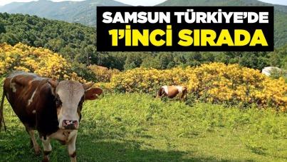 Samsun Türkiye'de 1'inci sırada
