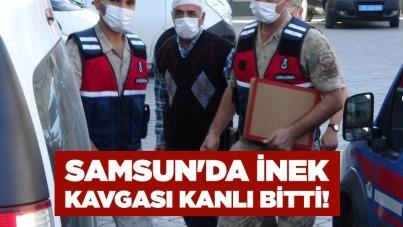 Samsun'da inek kavgası kanlı bitti!