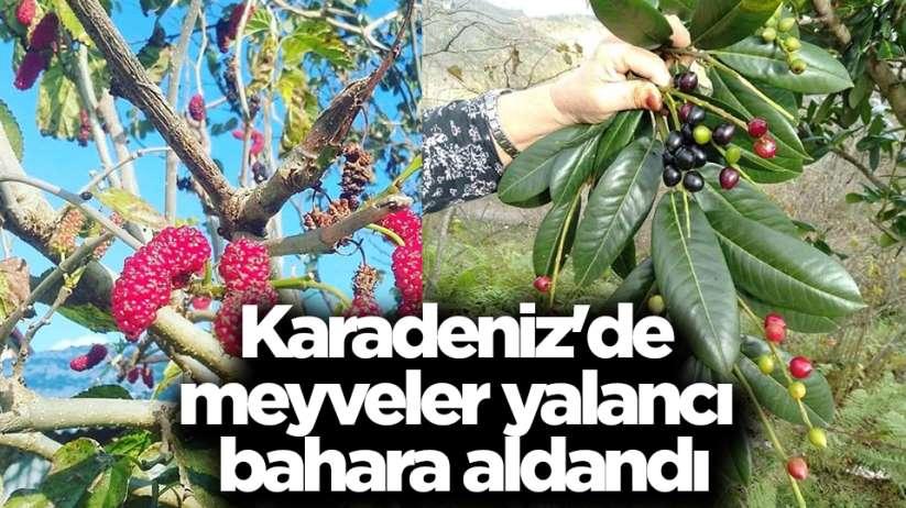 Karadeniz'de meyveler yalancı bahara aldandı