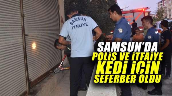 Samsun'da polis ve itfaiye kedi için seferber oldu