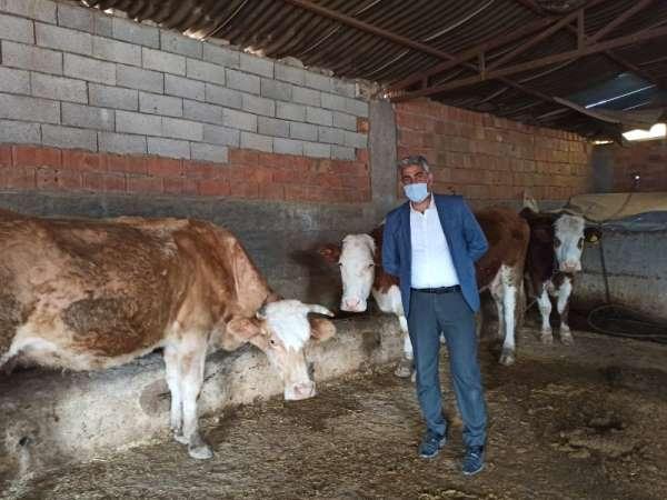 Siirt'te devlet desteğiyle hayvancılık gelişiyor