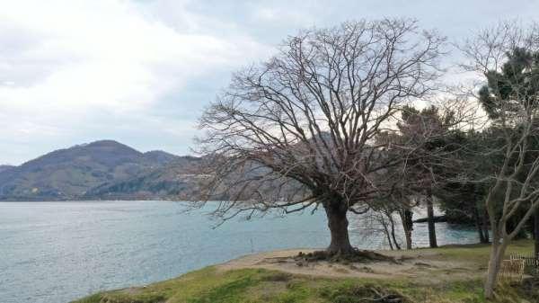 140 yıllık ıhlamur ağacı anıt ağaç oldu