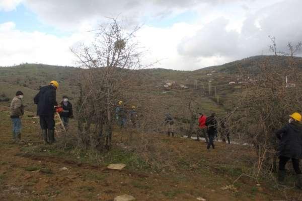 Yabani ahlat ağaçları, aşılanarak üretime değer katacak