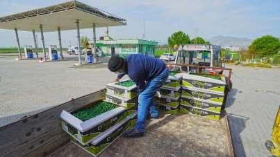Kahramanmaraş'ta çiftçiye 2,5 milyon adet biber fidesi dağıtılıyor